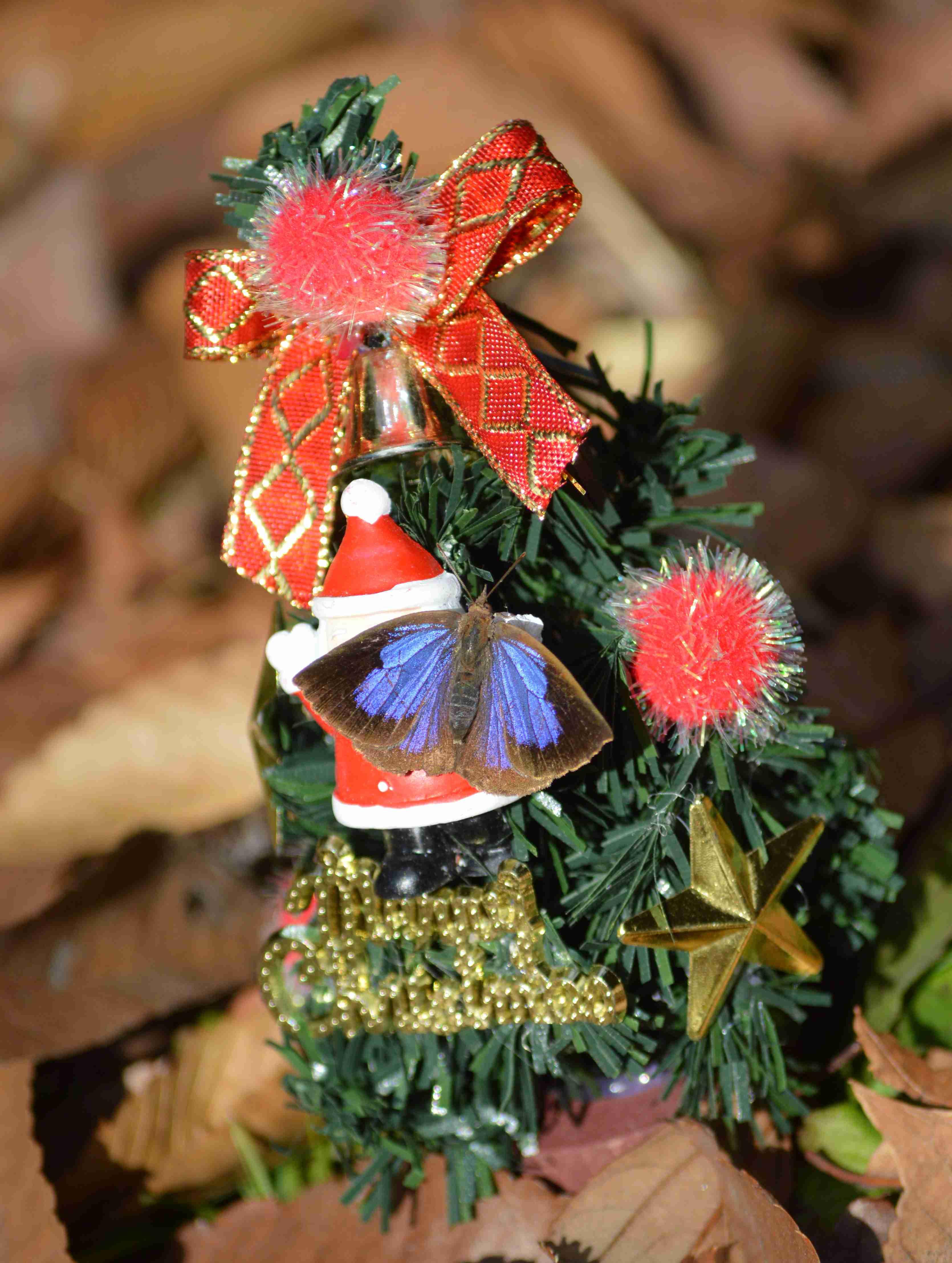 ムラサキシジミ Merry Christmas_d0254540_14295138.jpg