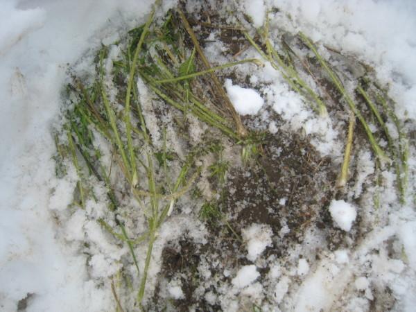 この時期にしては意外な大雪が…。_e0121558_12270922.jpg