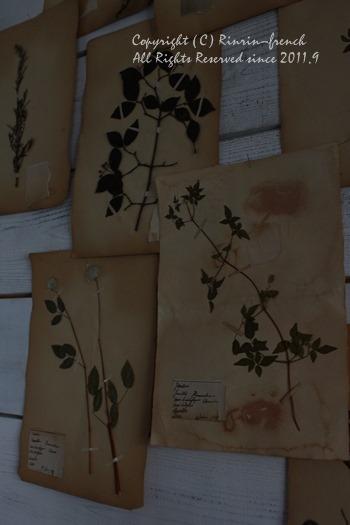 アンティークの植物標本を壁に・・・_e0237680_141561.jpg