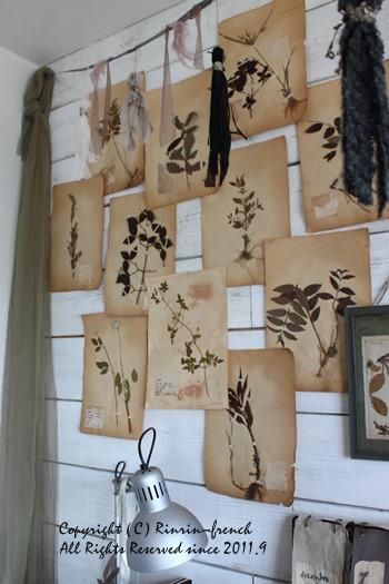 アンティークの植物標本を壁に・・・_e0237680_1419590.jpg