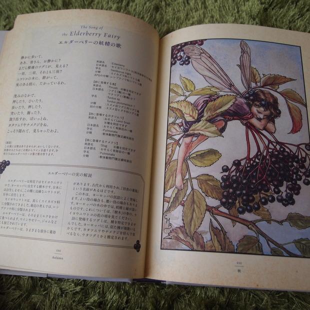 花の妖精ー英国の花たちー_a0292194_19595953.jpg