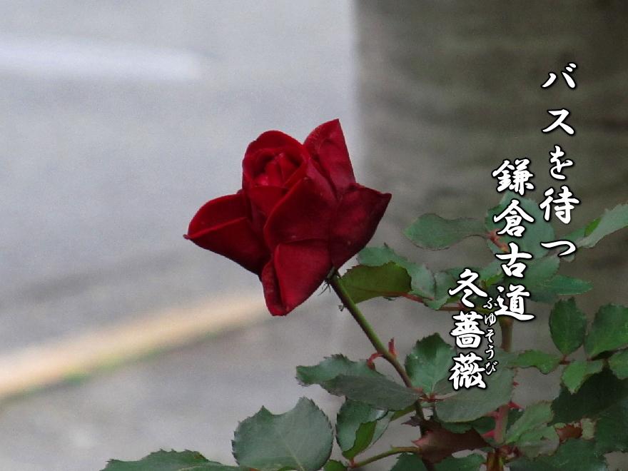 f0137096_19574022.jpg