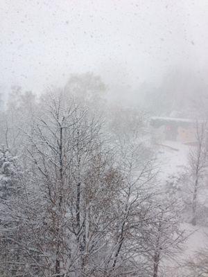 ワ!大雪だ‼︎_f0101201_9332222.jpg