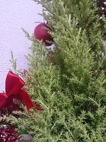 クリスマスツリーでアロマ_d0272805_17475819.jpg
