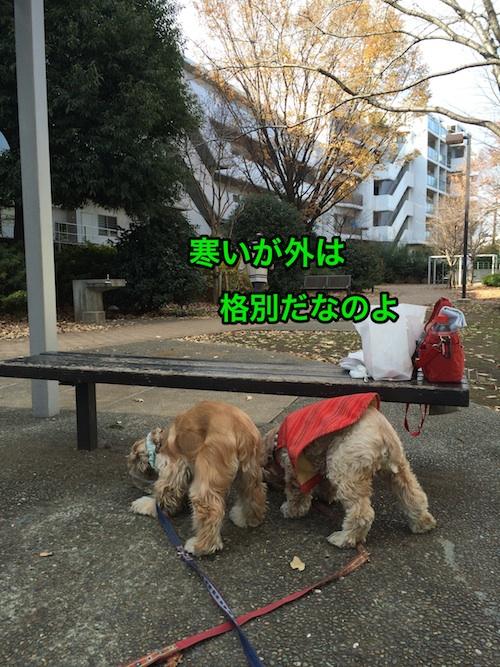 b0067012_0584648.jpg