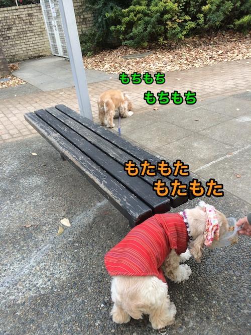 b0067012_1504.jpg