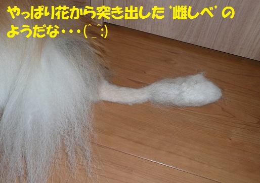 続・太雅くんのお尻尾が~(^_^;)_f0121712_15142235.jpg