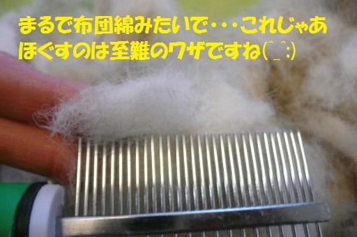 続・太雅くんのお尻尾が~(^_^;)_f0121712_1540478.jpg