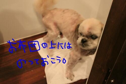 b0130018_901960.jpg