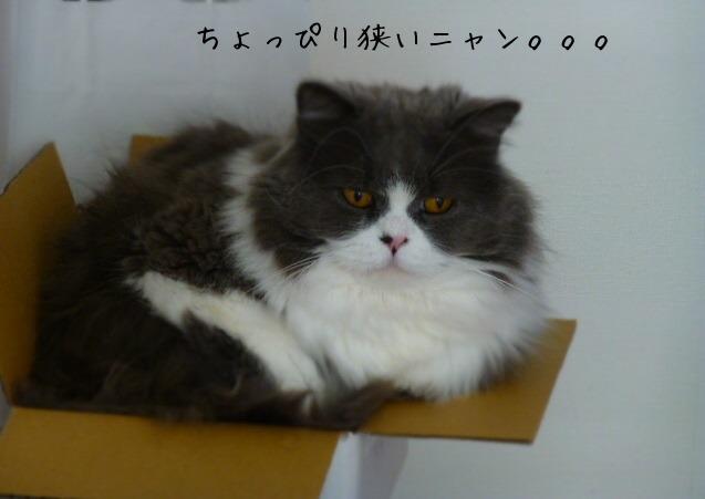 箱ネコ スモールサイズ編_e0237625_22563492.jpg