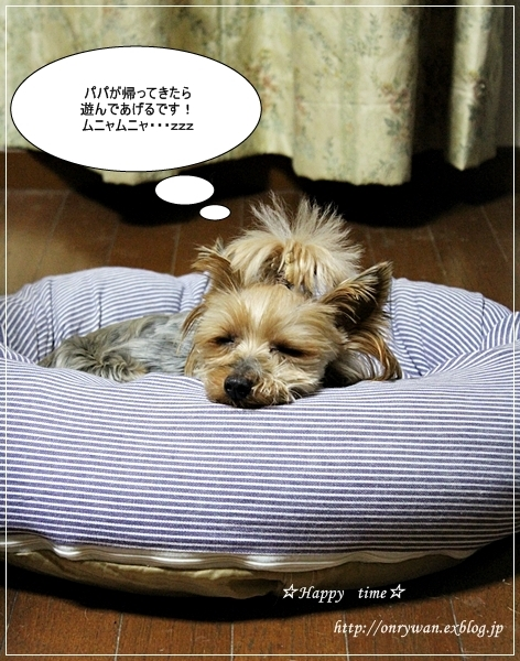 鮭弁当と寝顔♪_f0348032_19265303.jpg
