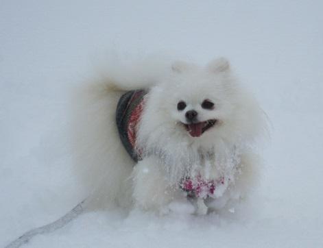 雪遊び~(1)_b0177436_12191153.jpg