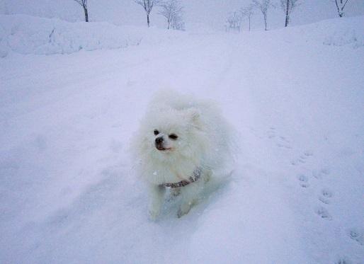 雪遊び~(1)_b0177436_12575795.jpg