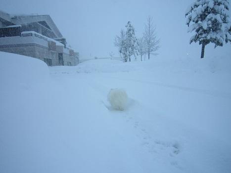 雪遊び~(1)_b0177436_12595074.jpg