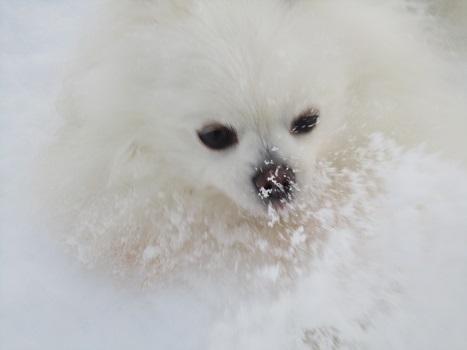 雪遊び~(1)_b0177436_1345227.jpg