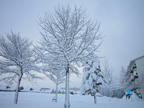 雪遊び~(1)_b0177436_16242.jpg