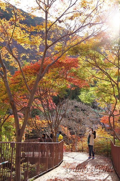 京都 ~3~ 清水寺の紅葉_f0084337_18340706.jpg
