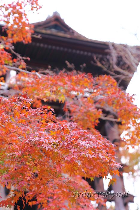 京都 ~3~ 清水寺の紅葉_f0084337_18343596.jpg