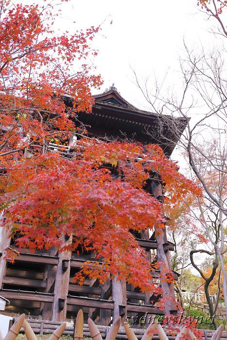 京都 ~3~ 清水寺の紅葉_f0084337_18344449.jpg