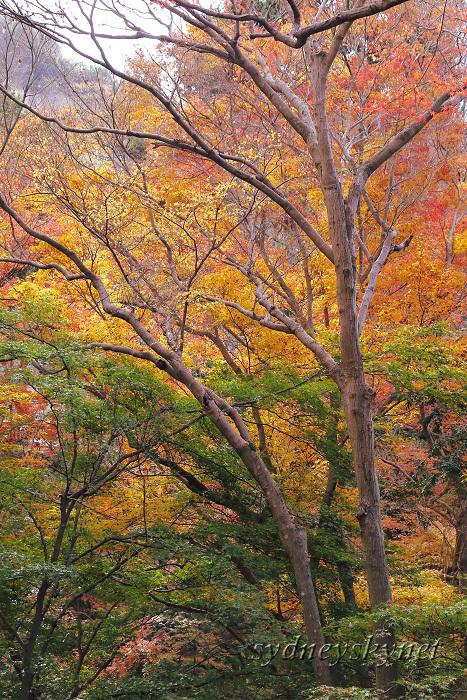 京都 ~3~ 清水寺の紅葉_f0084337_18350617.jpg