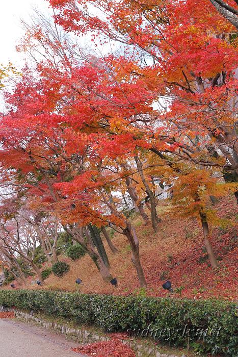 京都 ~3~ 清水寺の紅葉_f0084337_18353021.jpg