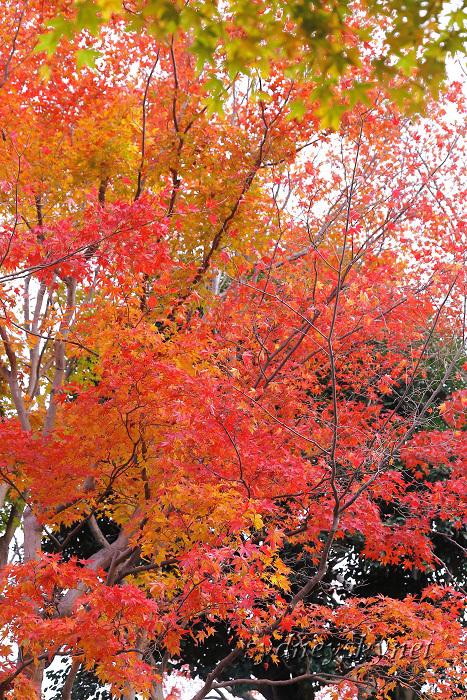 京都 ~3~ 清水寺の紅葉_f0084337_18353800.jpg