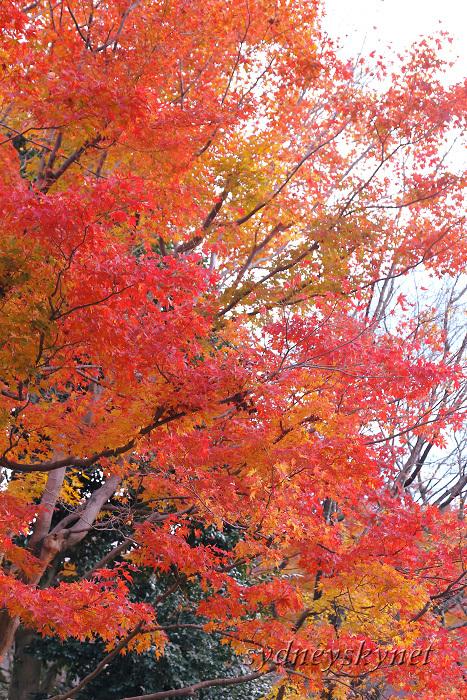 京都 ~3~ 清水寺の紅葉_f0084337_18354870.jpg