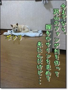 b0151748_11385563.jpg