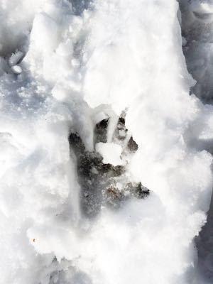 スキー場情報です꒰ ´͈ω`͈꒱_e0248949_15482918.jpg