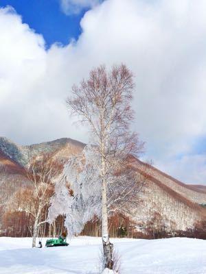 スキー場情報です꒰ ´͈ω`͈꒱_e0248949_15483232.jpg