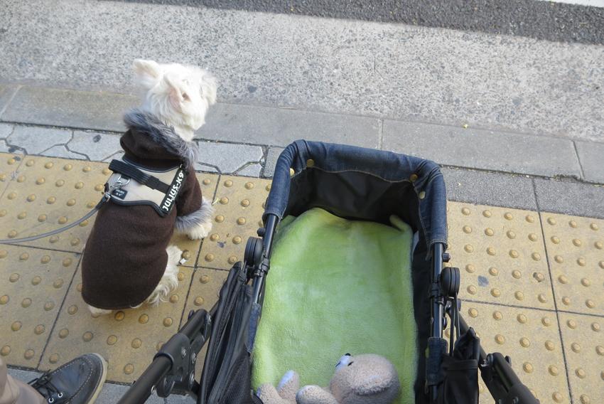 アミ、服部緑地へ行く。_b0107163_12294237.jpg