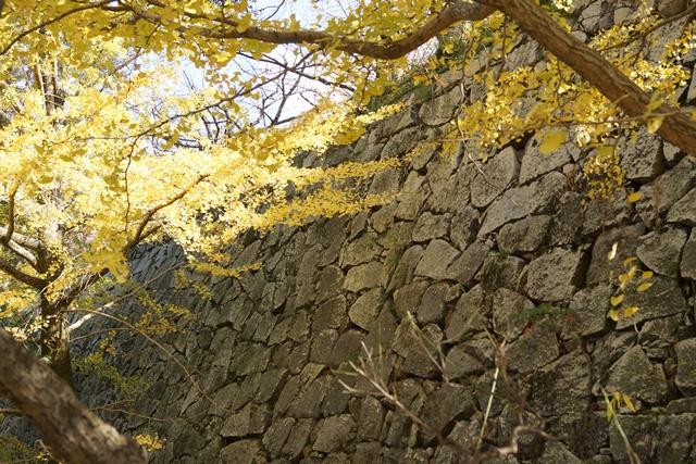 軍師黒田官兵衛・黒田長政が残した福岡城を訪ねて・・・・秋の博多の旅 秋の黒田城_d0181492_14193948.jpg
