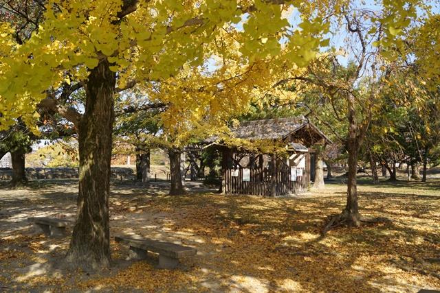 軍師黒田官兵衛・黒田長政が残した福岡城を訪ねて・・・・秋の博多の旅 秋の黒田城_d0181492_14204491.jpg