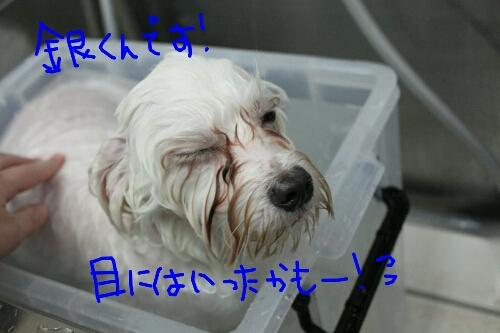 b0130018_953832.jpg
