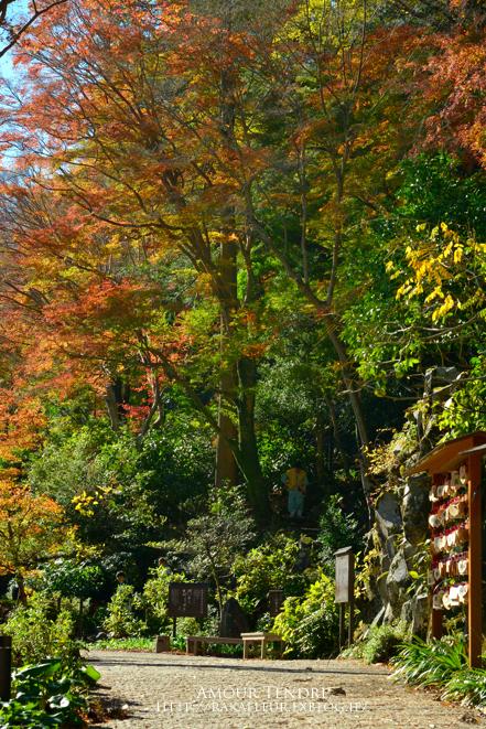 湘南平から箱根へ_c0250634_178375.jpg