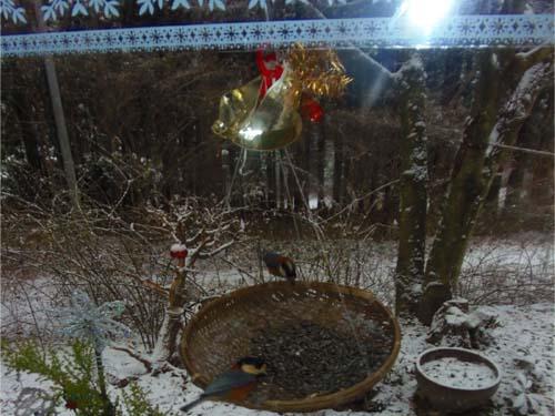雪が降る♪_d0127634_11435738.jpg