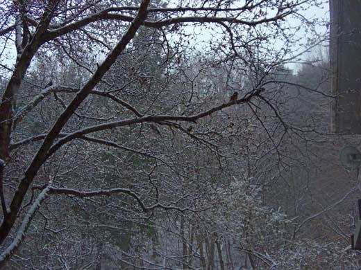 雪が降る♪_d0127634_11444579.jpg