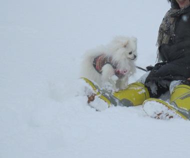 雪遊び~(2)_b0177436_1110401.jpg