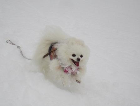 雪遊び~(2)_b0177436_1110639.jpg