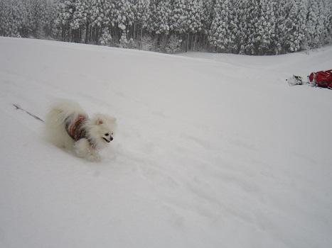 雪遊び~(2)_b0177436_1113255.jpg