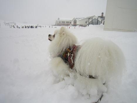 雪遊び~(2)_b0177436_11145633.jpg