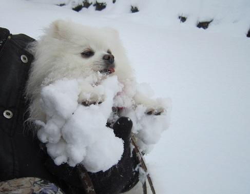 雪遊び~(2)_b0177436_11152682.jpg