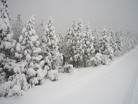 雪遊び~(2)_b0177436_11222370.jpg
