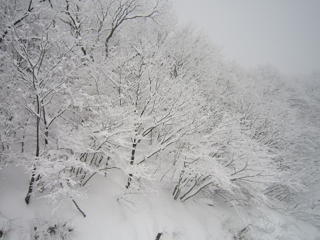 雪遊び~(2)_b0177436_11273991.jpg