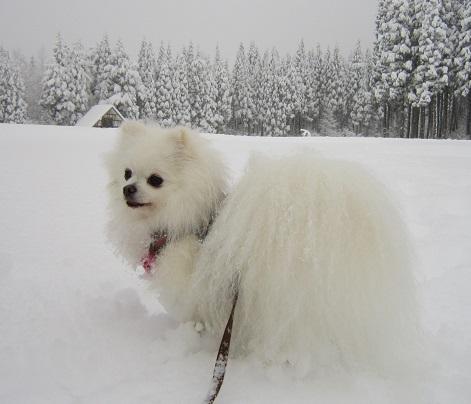 雪遊び~(2)_b0177436_1163086.jpg