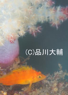 オレンジVSイエロー_b0163039_1628511.jpg