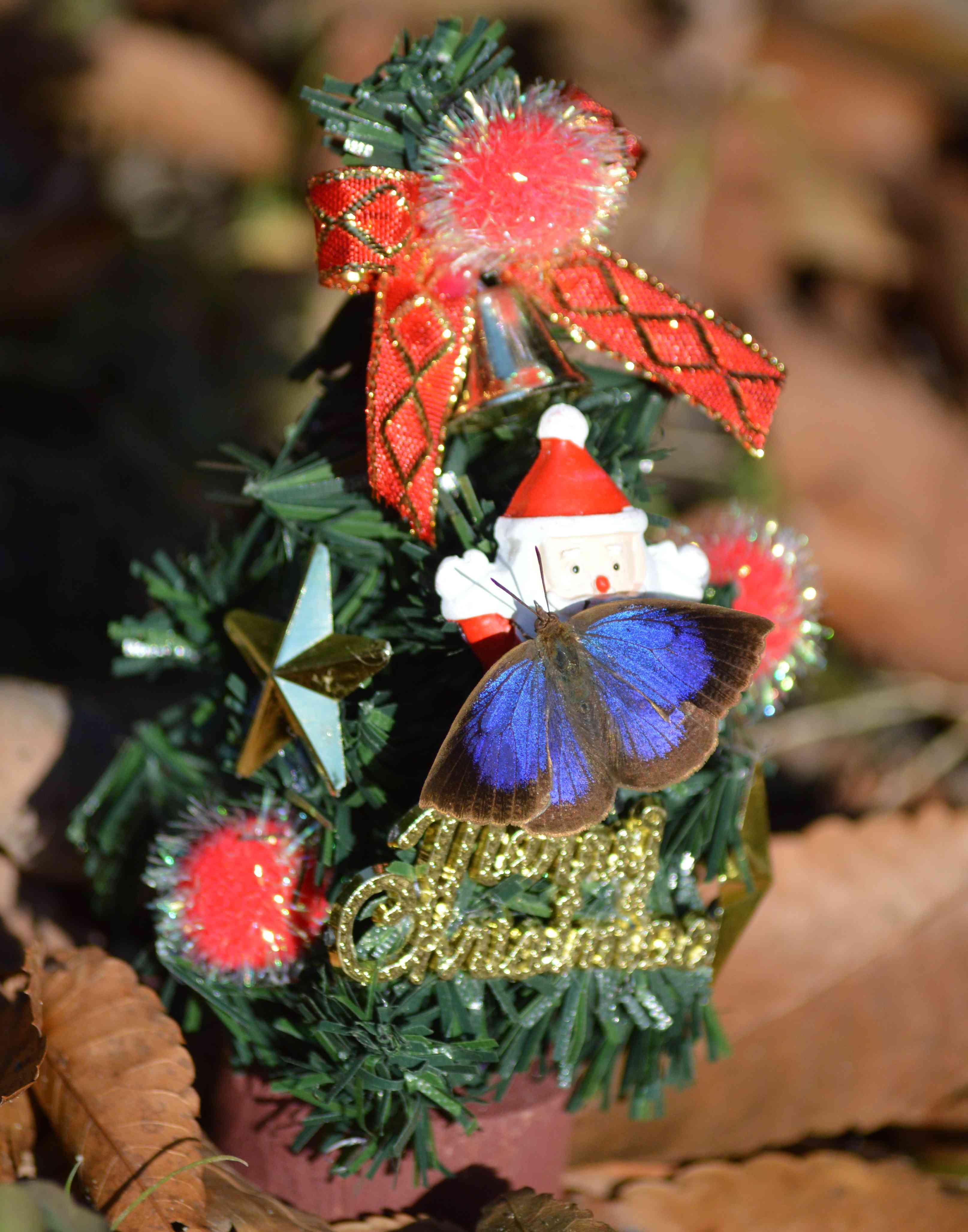 ムラサキシジミ Merry Christmas_d0254540_482933.jpg