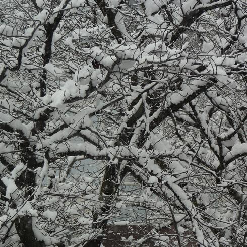 こんな雪は久しぶり....。_f0099102_20591966.jpg