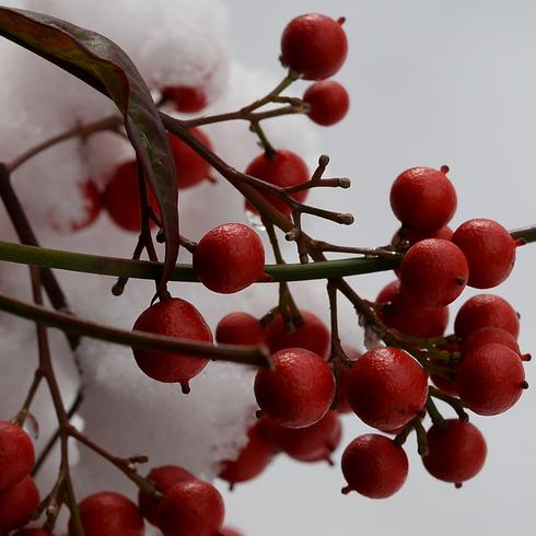 こんな雪は久しぶり....。_f0099102_20594886.jpg