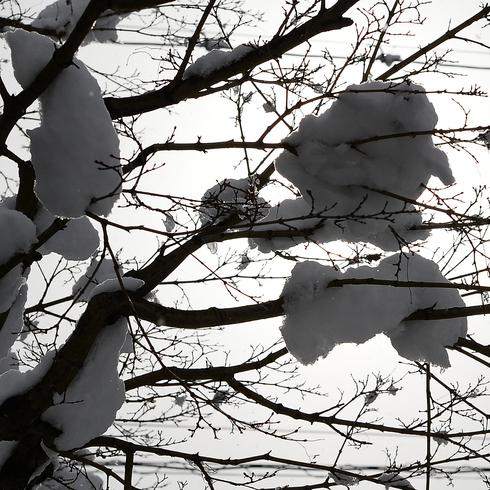 こんな雪は久しぶり....。_f0099102_210378.jpg